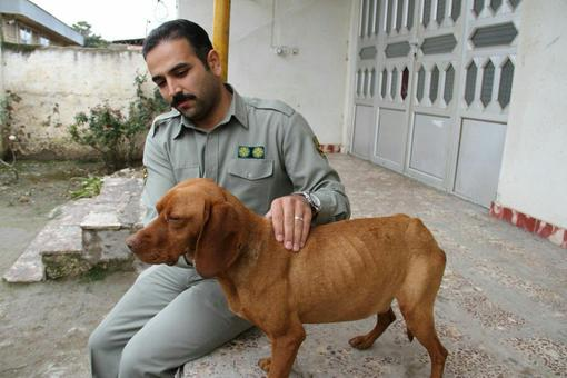 کانال+تلگرام+سگ+شکاری