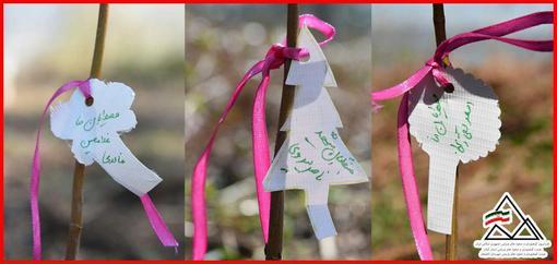 نهالهایی که روز گذشته به یاد جنگلبانان و محیط بانان شهید و نیز دربند در یاسوج به وسیله دوستداران محیط زیست در جنگلهای لاهیجان کاشته شد.
