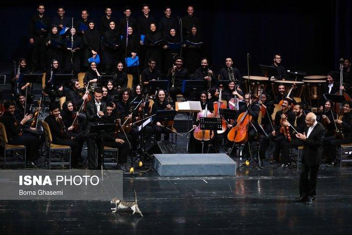 در حاشیه اجرای ارکستر ملی/ دیگه وقتی ماشین رو اوردن رو سن تالار وحدت یه گربه کوچولو که چیزی نیست