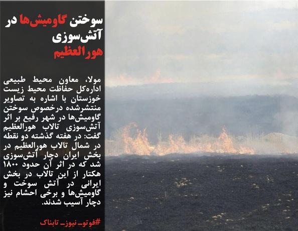 مولا، معاون محیط طبیعی ادارهکل حفاظت محیط زیست خوزستان با اشاره به تصاویر منتشرشده درخصوص سوختن گاومیشها در شهر رفیع بر اثر آتشسوزی تالاب هورالعظیم گفت: در هفته گذشته دو نقطه در شمال تالاب هورالعظیم در بخش ایران دچار آتشسوزی شد که در اثر آن حدود 1800 هکتار از این تالاب در بخش ایرانی در آتش سوخت و گاومیشها و برخی احشام نیز دچار آسیب شدند.