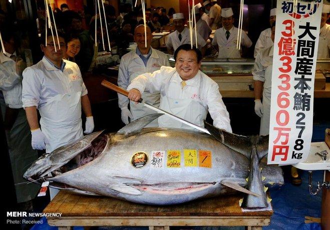 رکورد گرانترین ماهی دنیا