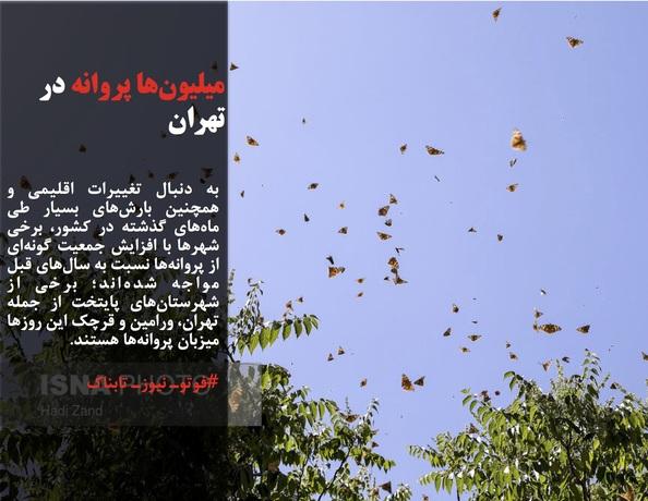 به دنبال تغییرات اقلیمی و همچنین بارشهای بسیار طی ماههای گذشته در کشور، برخی شهرها با افزایش جمعیت گونهای از پروانهها نسبت به سالهای قبل مواجه شدهاند؛ برخی از شهرستانهای پایتخت از جمله تهران، ورامین و قرچک این روزها میزبان پروانهها هستند.