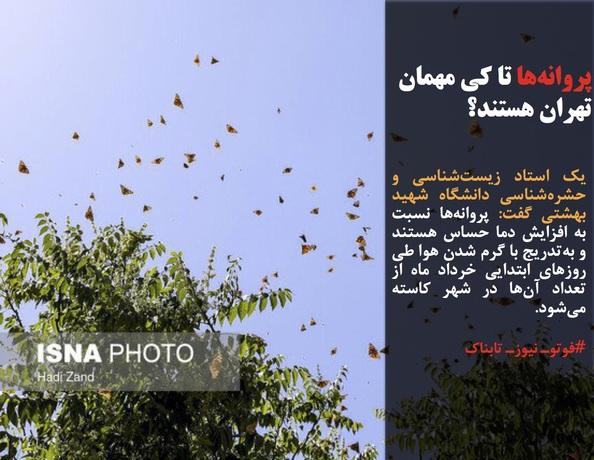 یک استاد زیستشناسی و حشرهشناسی دانشگاه شهید بهشتی گفت: پروانهها نسبت به افزایش دما حساس هستند و بهتدریج با گرم شدن هوا طی روزهای ابتدایی خرداد ماه از تعداد آنها در شهر کاسته میشود.