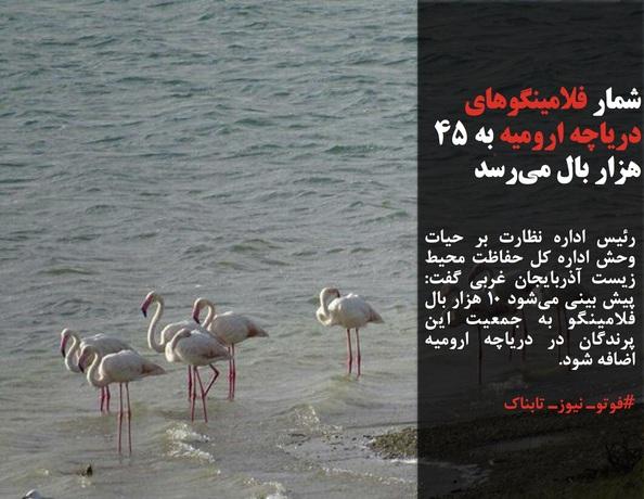 رئیس اداره نظارت بر حیات وحش اداره کل حفاظت محیط زیست آذربایجان غربی گفت: پیش بینی میشود ۱۰ هزار بال فلامینگو به جمعیت این پرندگان در دریاچه ارومیه اضافه شود.
