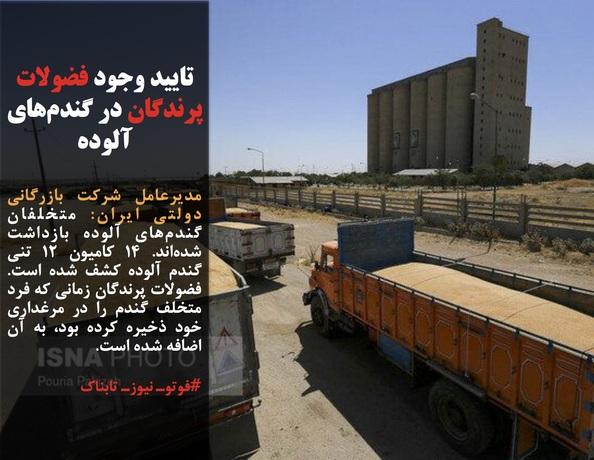 مدیرعامل شرکت بازرگانی دولتی ایران: متخلفان گندمهای آلوده بازداشت شدهاند. ۱۴ کامیون ۱۲ تنی گندم آلوده کشف شده است. فضولات پرندگان زمانی که فرد متخلف گندم را در مرغداری خود ذخیره کرده بود، به آن اضافه شده است.