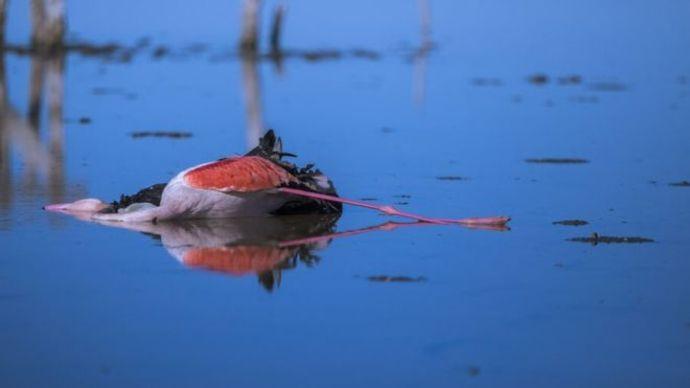 واکنش ترسناک و دیرهنگام سازمان محیط زیست به فاجعه میانکاله!