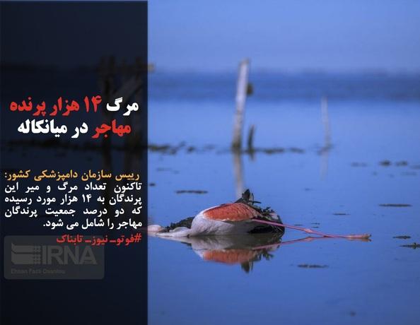 رییس سازمان دامپزشکی کشور: تاکنون تعداد مرگ و میر این پرندگان به ۱۴ هزار مورد رسیده که دو درصد جمعیت پرندگان مهاجر را شامل می شود.