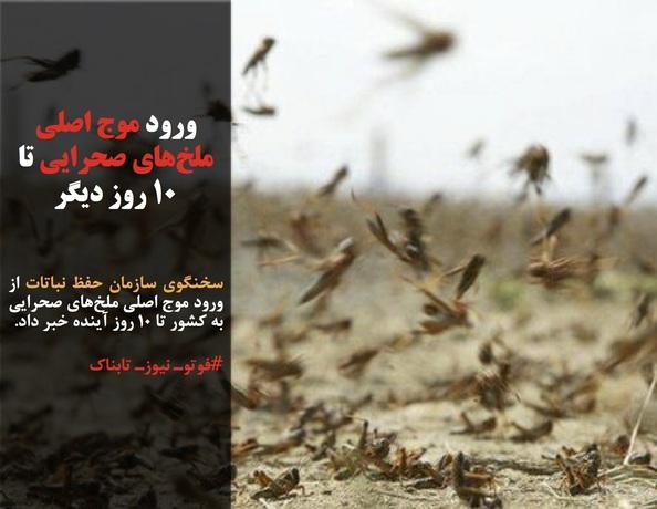 سخنگوی سازمان حفظ نباتات از ورود موج اصلی ملخهای صحرایی به کشور تا ۱۰ روز آینده خبر داد.