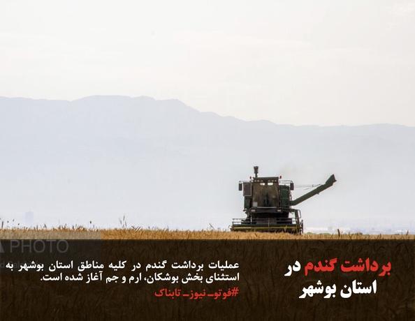 عملیات برداشت گندم در کلیه مناطق استان بوشهر به استثنای بخش بوشکان، ارم و جم آغاز شده است.